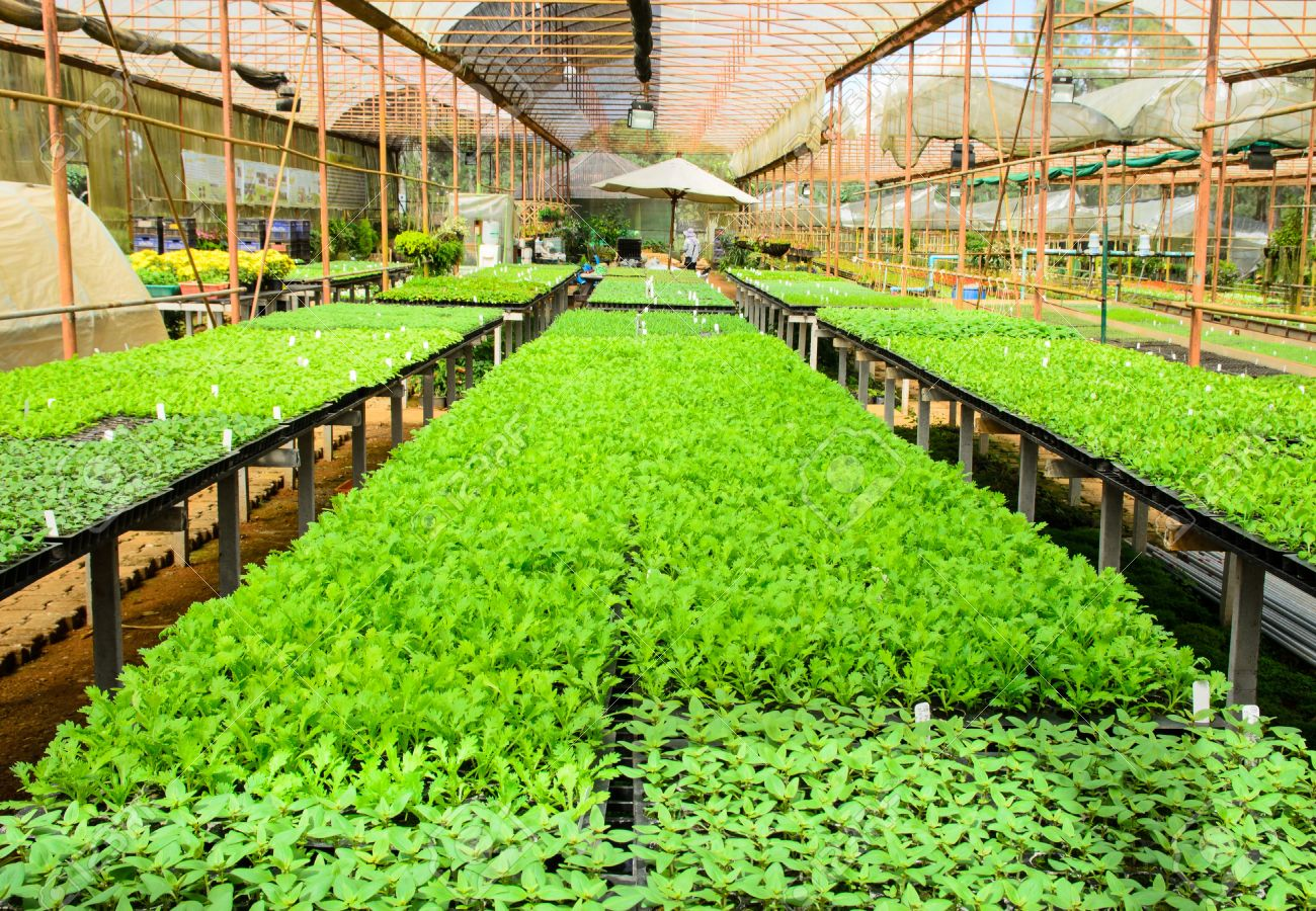 16550471-vegetable-farm-planting-in-glass-house-in-north-of-thailand