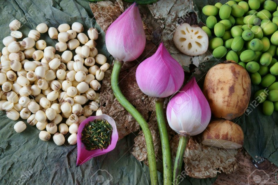 42117564-collection-of-lotus-pink-lotus-flower-green-seed-white-lotus-seed-in-fresh-and-dry-herbal-tea-of-thi